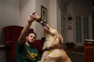 dog and alcohol